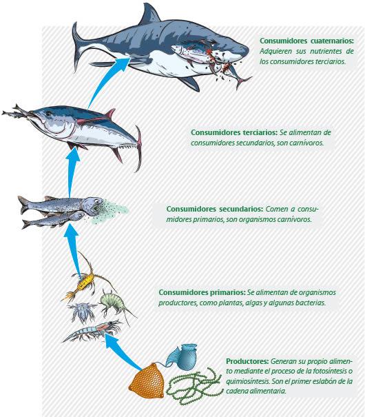 Cadena alimenticia acuática