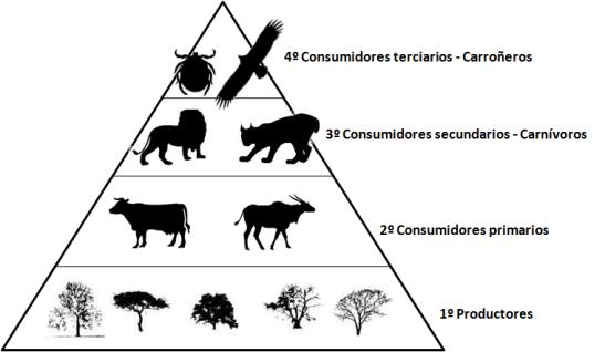 Elementos de la cadena alimenticia