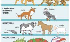 ¿Cuáles son los eslabones de la cadena alimentaria?