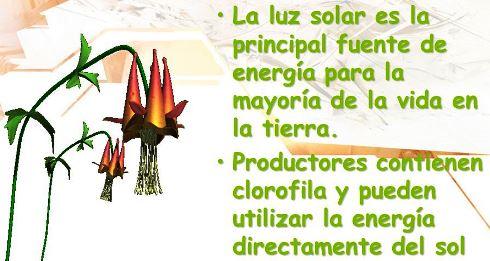 ¿Cuál es la principal fuente de energía en un ecosistema?