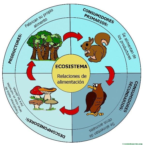 Importancia de la cadena alimenticia en los ecosistemas