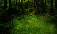 Cadena alimenticia del bosque tropical