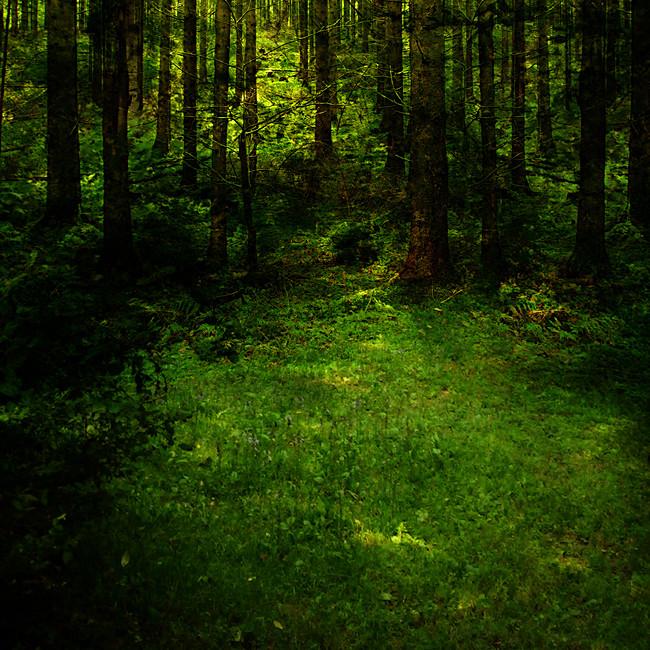 cadena-alimenticia-del-bosque-tropical