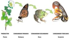 Cadena alimenticia de la mariposa