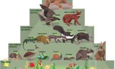 Cadena alimenticia de la selva húmeda