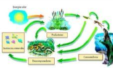 Cadena alimenticia de las plantas