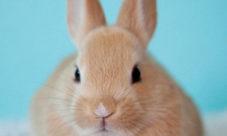 Cadena alimenticia del conejo